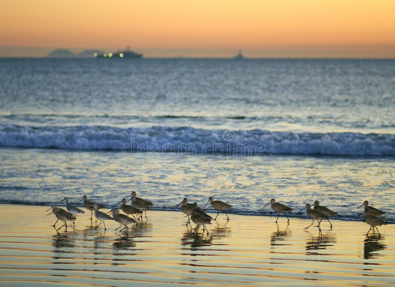 De Vogels van het strand royalty-vrije stock afbeeldingen
