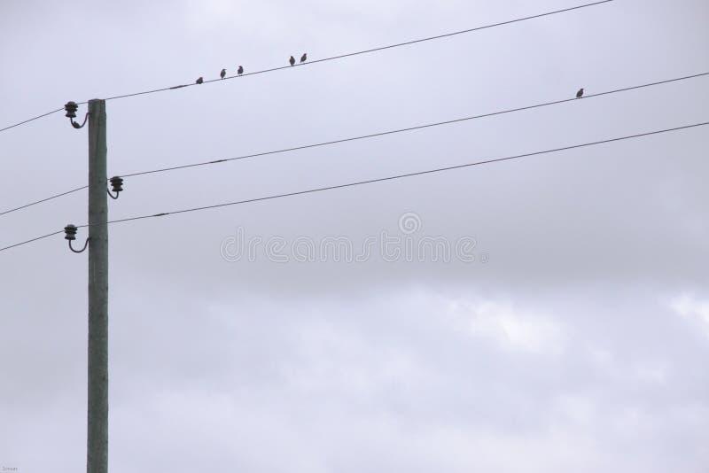 De vogels zitten op de draden, bewolkte dag stock afbeelding