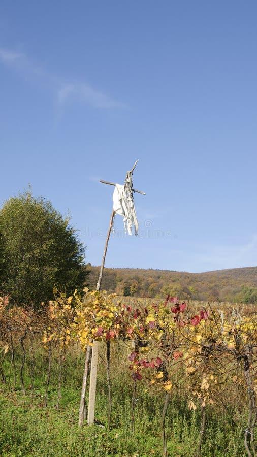 De vogelverschrikker in wijngaard royalty-vrije stock foto