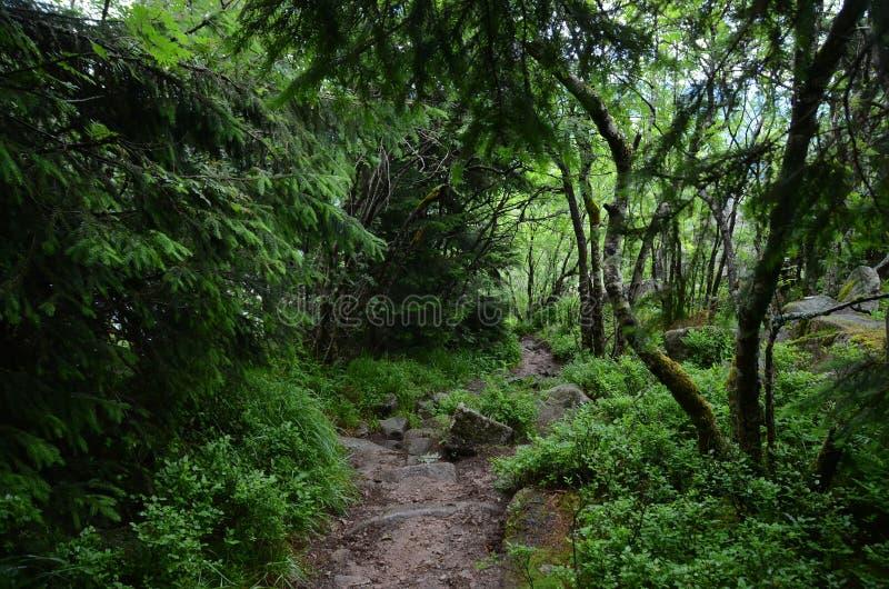 De Vogezen-bos stock foto