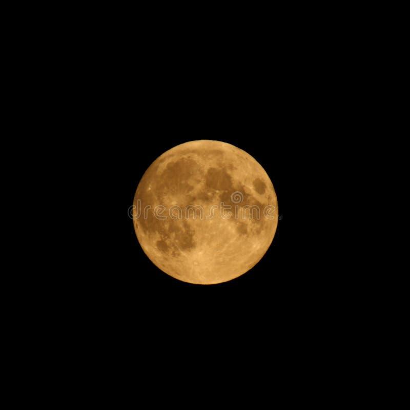 De volledige Maan van de Oogst stock fotografie