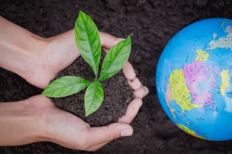De volwassen hand houdt een kleine boom naast de bol, plant een boom, vermindert het globale verwarmen, de Dag van het Wereldmili stock afbeelding