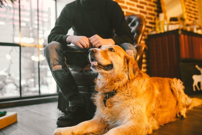 De volwassen hond een golden retriever, abrador ligt naast de eigenaar` s benen van een mannelijke kweker Binnen huis op a stock afbeelding