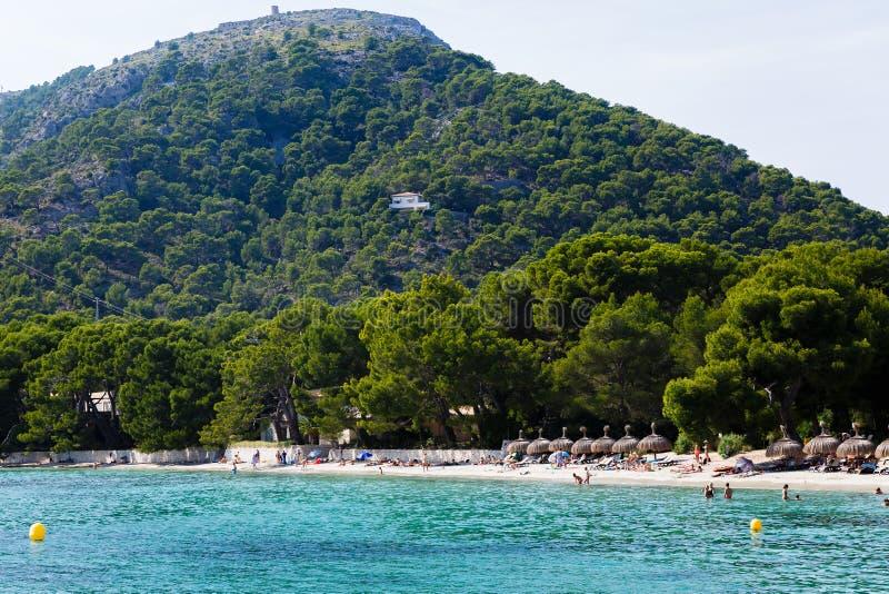 in de voorgrond is het strand en begint onmiddellijk met het pijnboombos royalty-vrije stock fotografie