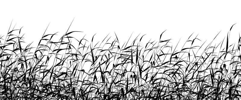 De voorgrond van het riet vector illustratie