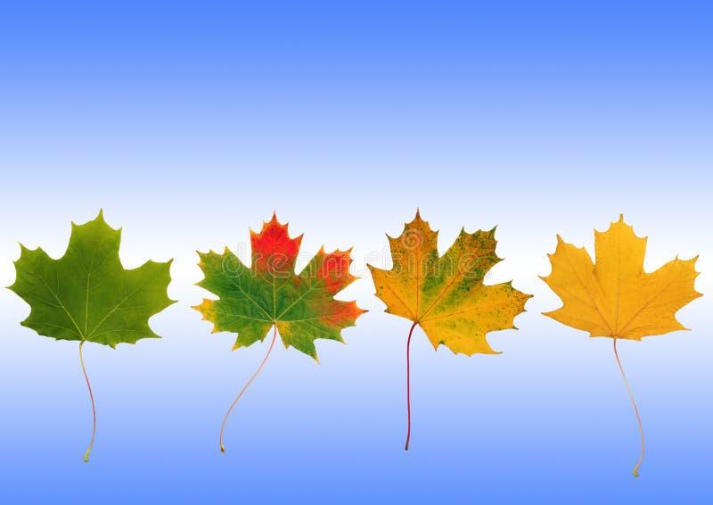 De Vooruitgang van de herfst royalty-vrije stock foto's
