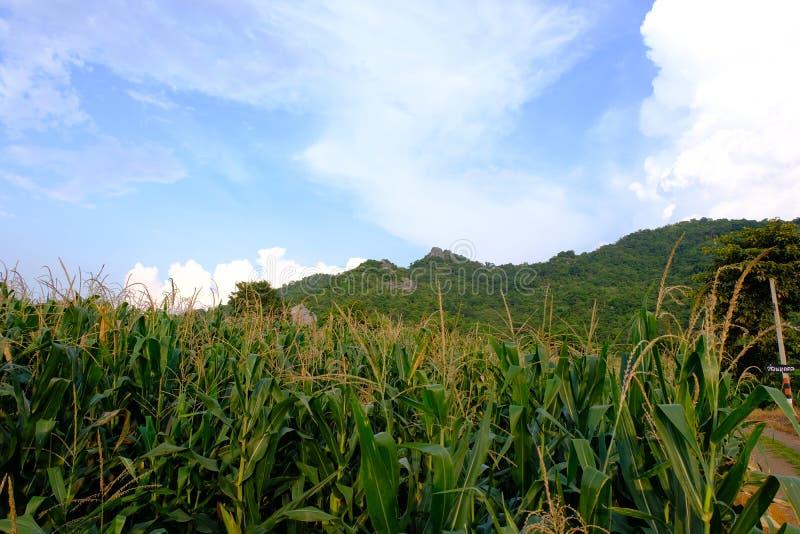 De voorzijde van het graangebied van heuvel Thailand Azië royalty-vrije stock foto