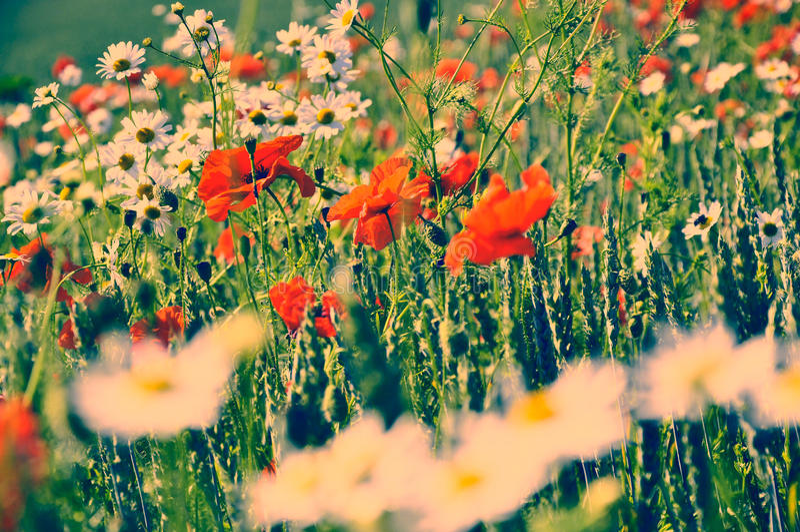 De vorige zomer, retro bloemen stock foto's