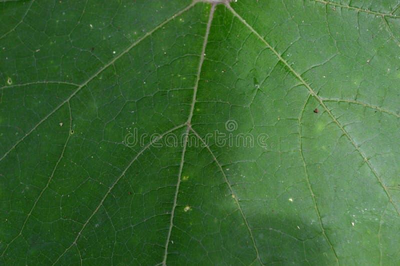 De vorm en de textuur van tropische groene bladeren royalty-vrije stock foto