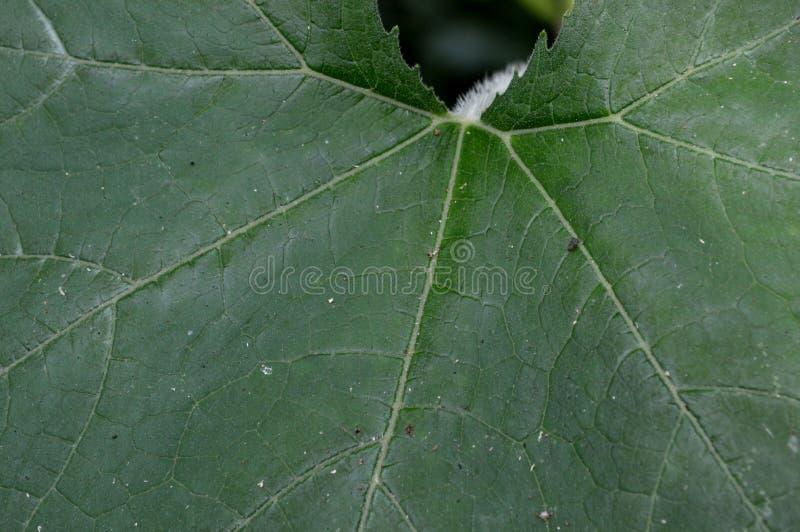 De vorm en de textuur van tropische groene bladeren royalty-vrije stock foto's