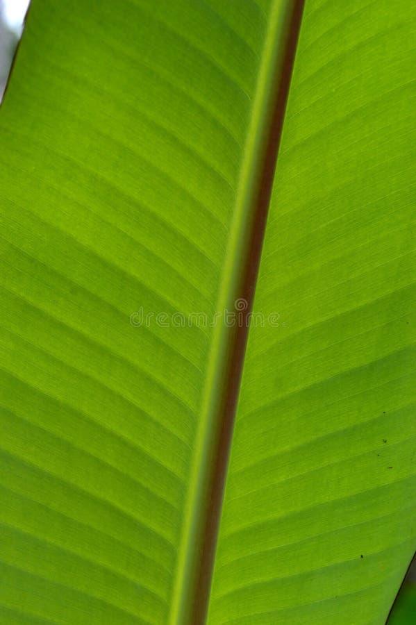 De vorm en de textuur van tropische groene bladeren stock foto's