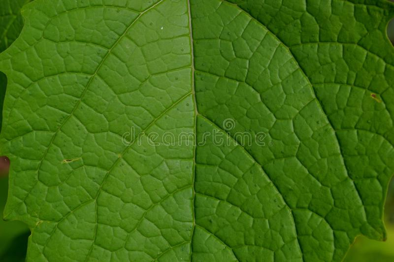 De vorm en de textuur van tropische groene bladeren stock afbeeldingen