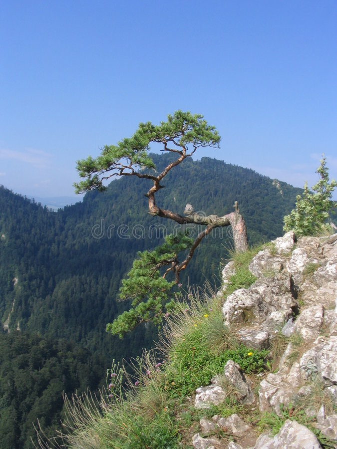 De vorm van de mening de Berg Sokolica stock afbeelding
