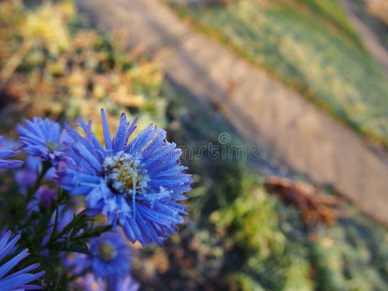 De vorst op de bloemen Ijzige die ochtend met vorstbloemen wordt behandeld op installaties Details en close-up stock foto's