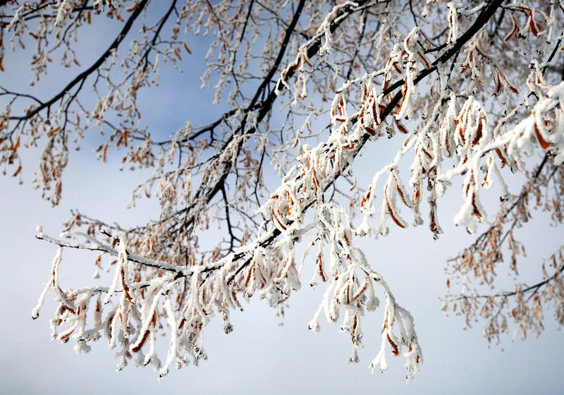 De Vorst van de winter stock afbeeldingen
