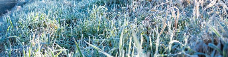 De vorst van de de winterochtend op gras - bannerbeeld royalty-vrije stock afbeeldingen