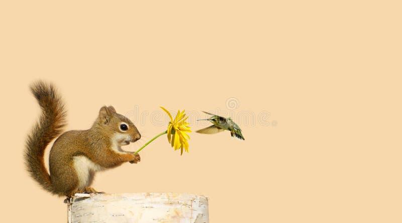 De vrienden van de eekhoorn en van de kolibrie. royalty-vrije stock foto's