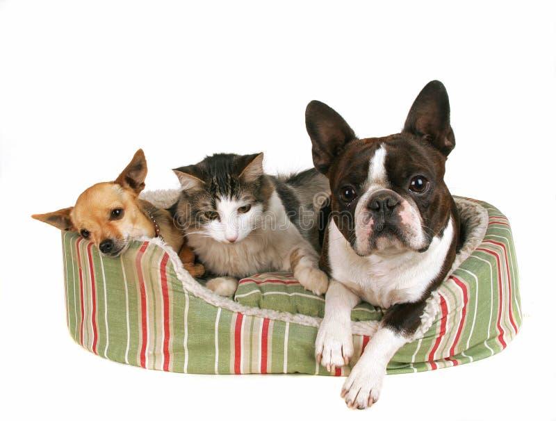 De vrienden van het huisdier stock fotografie