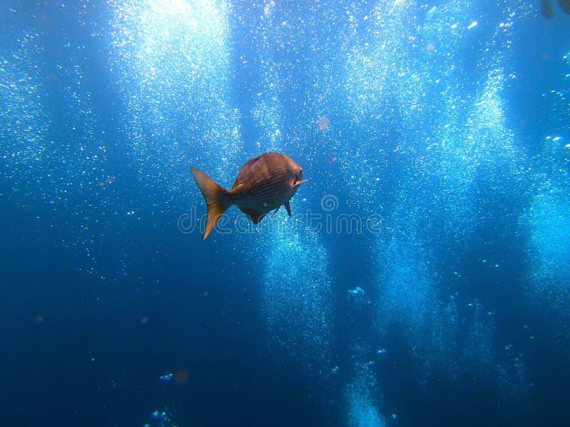 De Vrijheidsvissen van schipbreukuss met duikerbellen - Bali Indonesië Azië stock afbeeldingen
