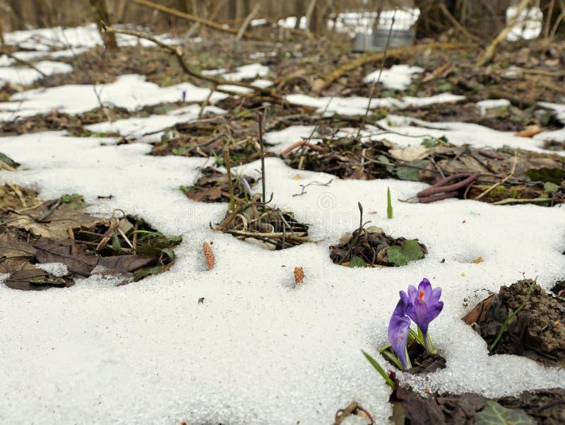 De vroege lente in Alpen stock foto's