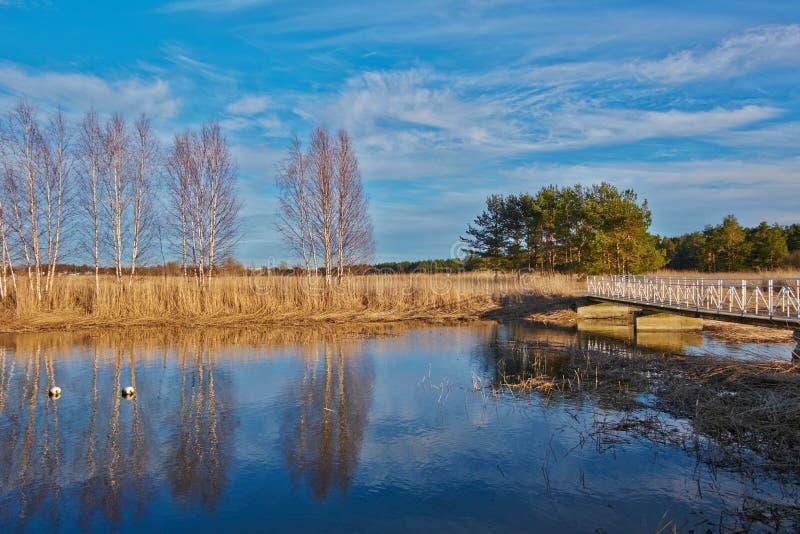 De vroege lente, naakte bomen op de kust van een kalme rivier royalty-vrije stock afbeelding