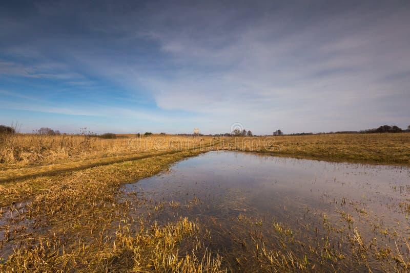 De vroege lente op weide dichtbij moerasland stock afbeelding