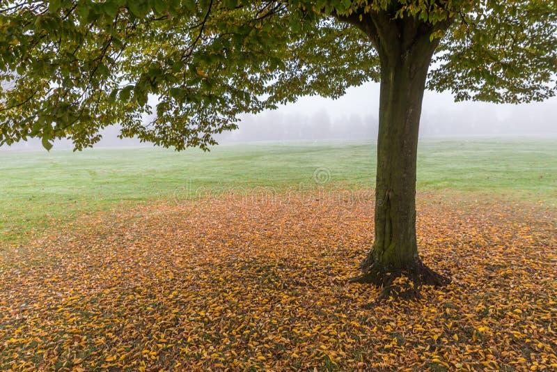 De vroege ochtendmening van eenzame de herfstboom met kleurrijke bladeren vertroebelt rond het royalty-vrije stock afbeelding