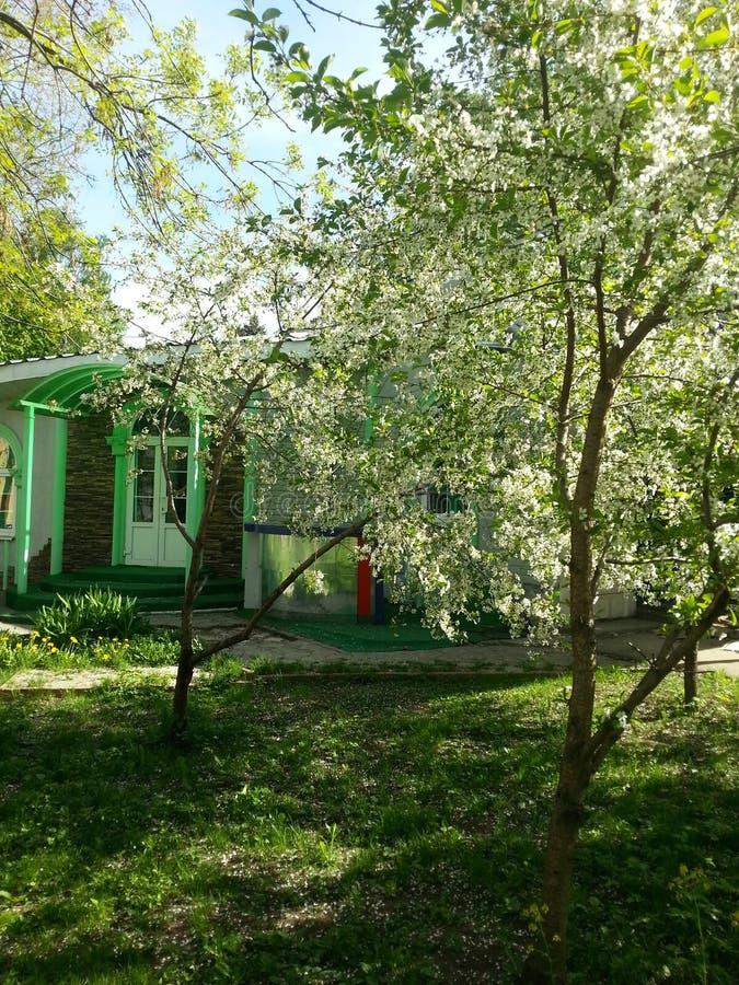 In de vroege zomer in Moskou, dichtbij de Botanische tuin, bloeiende fruitbomen stock afbeelding