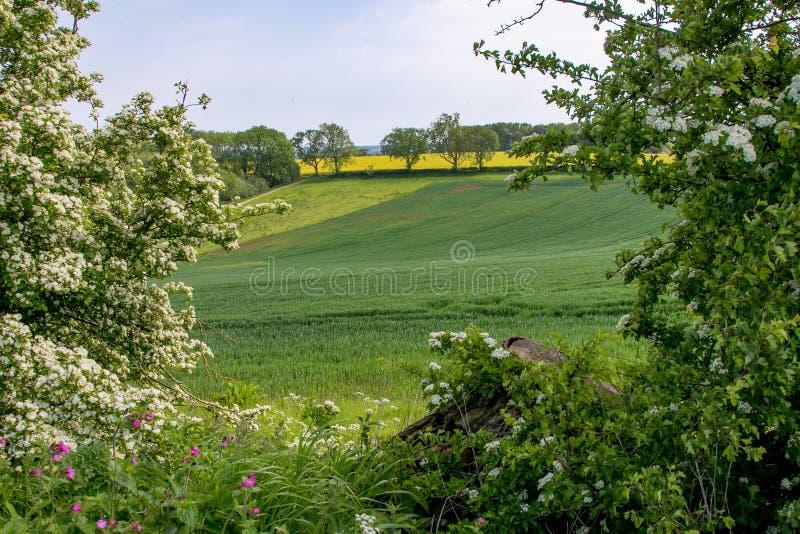 De vroege zomermening van rollend Engels platteland royalty-vrije stock afbeelding