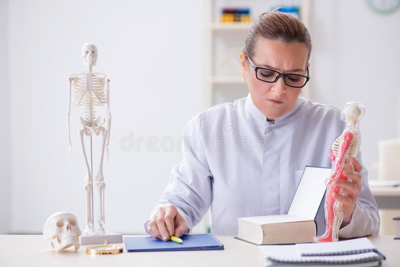 De vrouw arts die menselijk skelet bestuderen royalty-vrije stock fotografie
