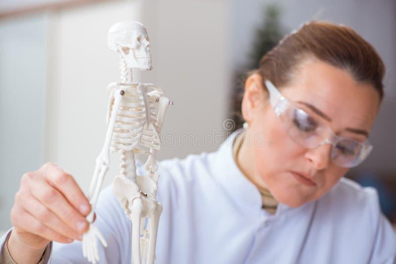 De vrouw arts die menselijk skelet bestuderen royalty-vrije stock afbeeldingen