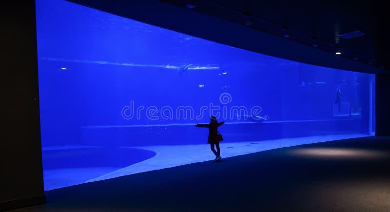De vrouw bewondert alleen een groot aquarium stock fotografie