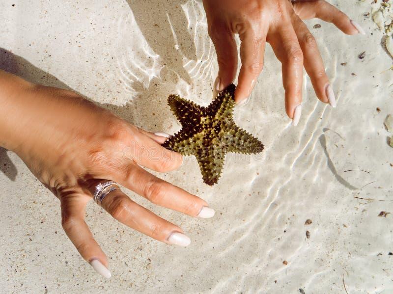 De vrouw in de Caraïbische Zee, houdt in de handen van zeester royalty-vrije stock afbeeldingen