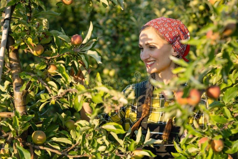 De vrouw die van de fruitlandbouwer haar appelboomgaard inspecteren royalty-vrije stock foto