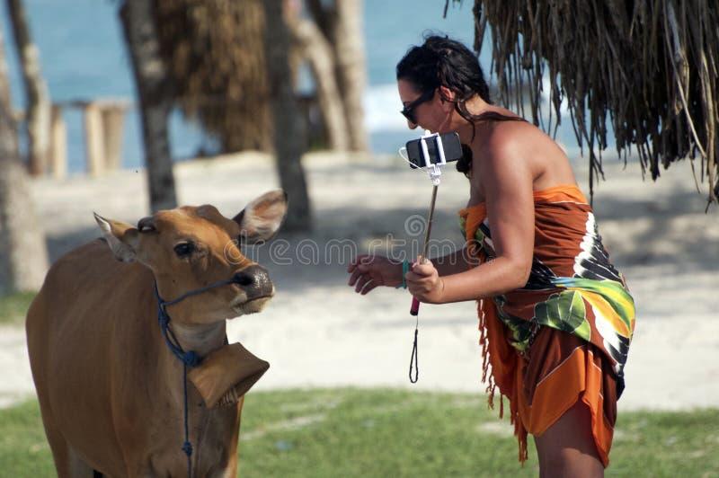 De vrouw die zonnebril dragen neemt selfie met een koe in Lombok, Vietnam stock foto