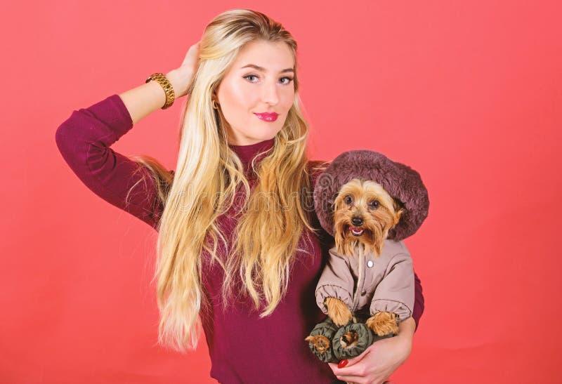De vrouw draagt de terri?r van Yorkshire Zorg ervoor de hond in kleren comfortabel voelt kleding en toebehoren Het kleden van hon stock foto's