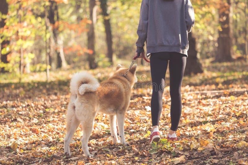 De vrouw en haar Akita-hond lopen en rust in park royalty-vrije stock foto
