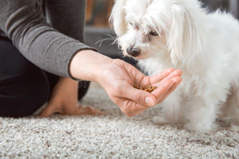De vrouw geeft voedsel aan haar hond stock fotografie