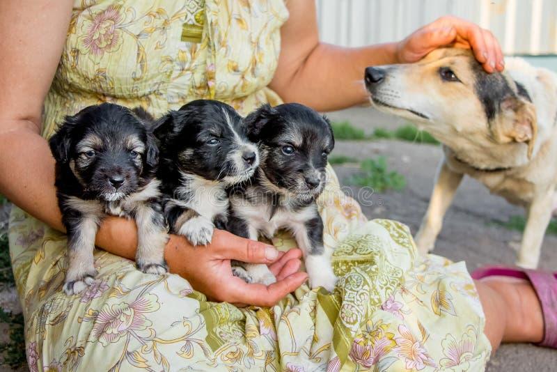 De vrouw houdt drie kleine puppys en streelt mamma-hond met haar h stock afbeeldingen