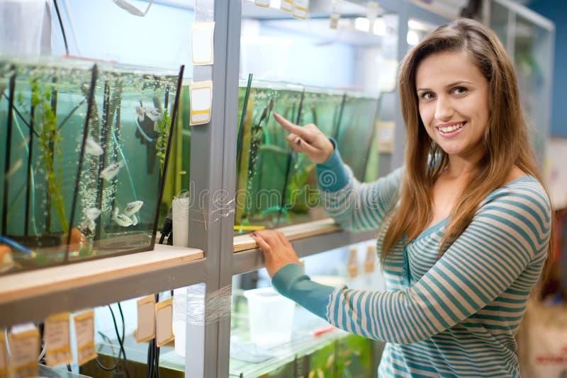 De vrouw kiest vissen in tank stock foto
