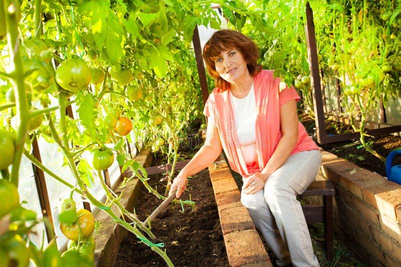 De vrouw kweekt oogst in de broeikas royalty-vrije stock foto