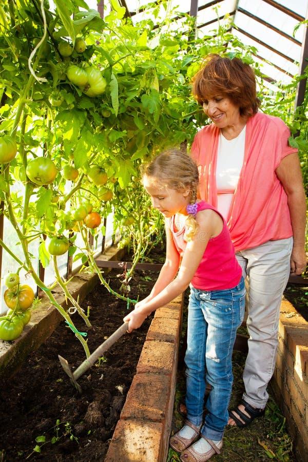 De vrouw met kind kweekt oogst in de serre royalty-vrije stock fotografie