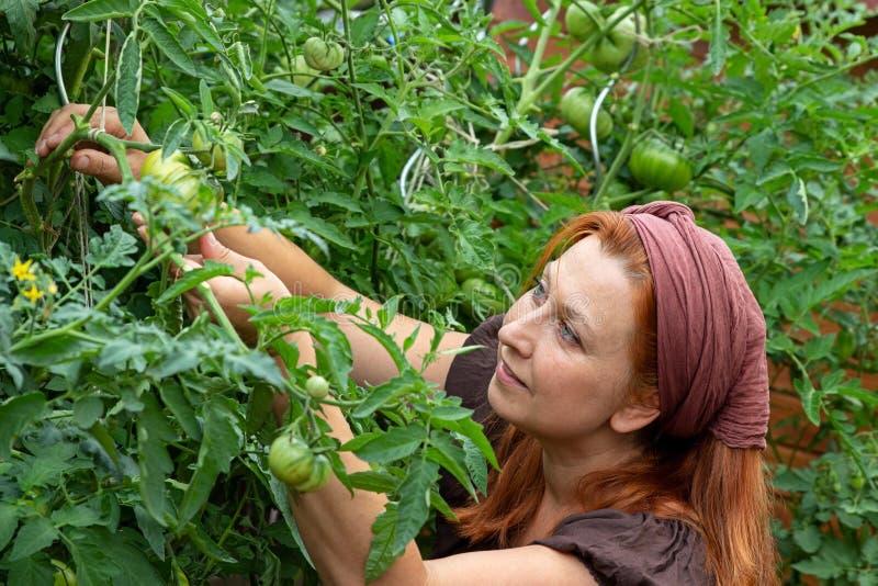 De vrouw onderzoekt haar installaties in de tuin stock foto