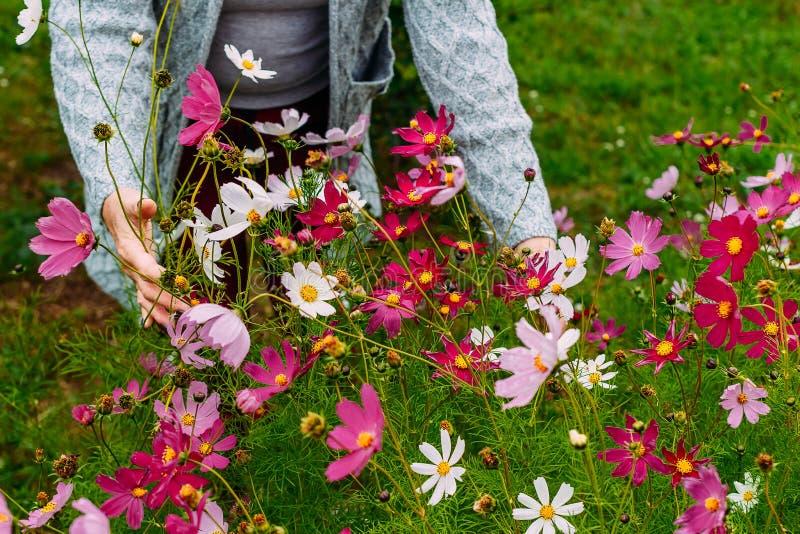 De vrouw plukt bloemen in tuin royalty-vrije stock afbeeldingen