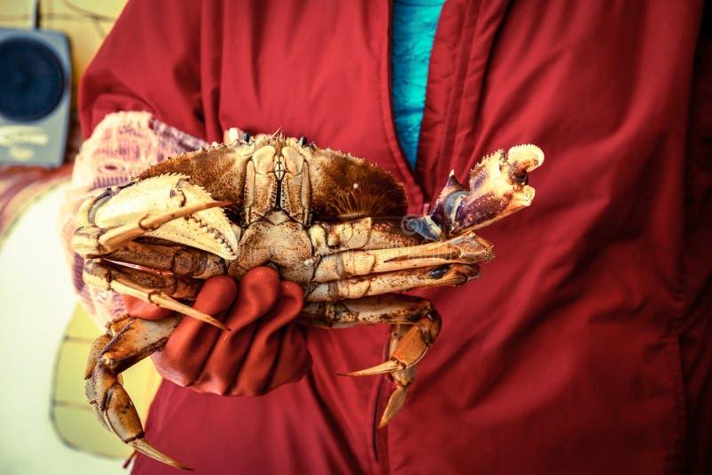 De vrouw in rode mantel houdt een krab in rode rubberhandschoenen stock foto's