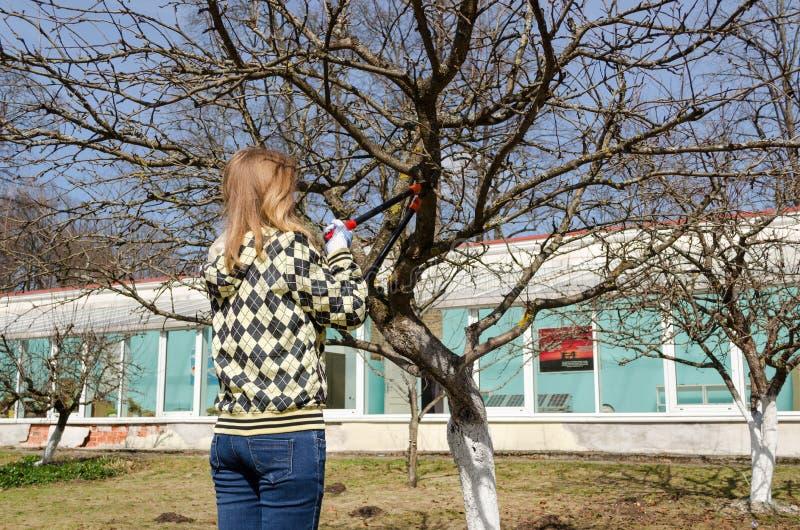 De vrouw sneed de tak van de fruitboom met tuinsnoeischaar royalty-vrije stock fotografie