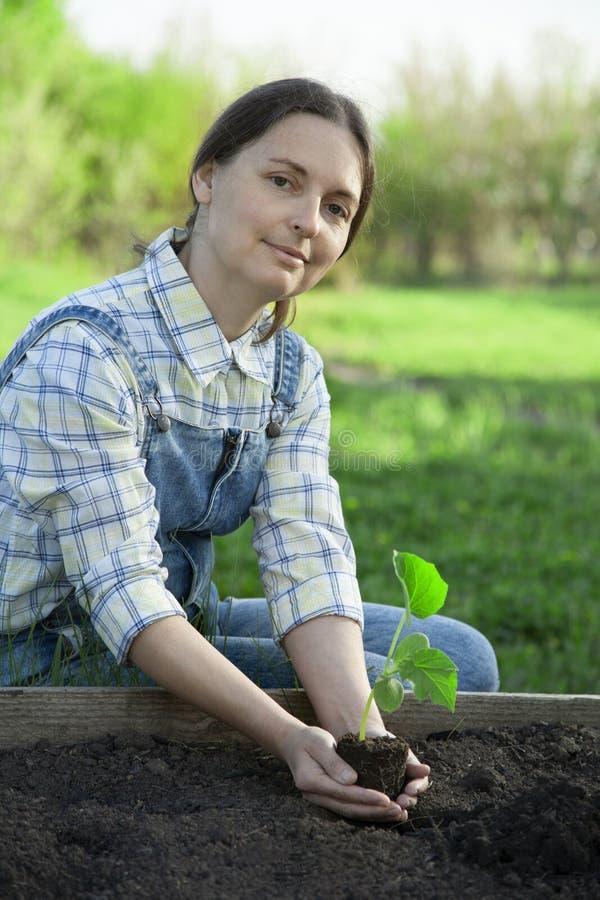 De vrouw in de tuin maakt het planten van Spruit in grond stock afbeeldingen