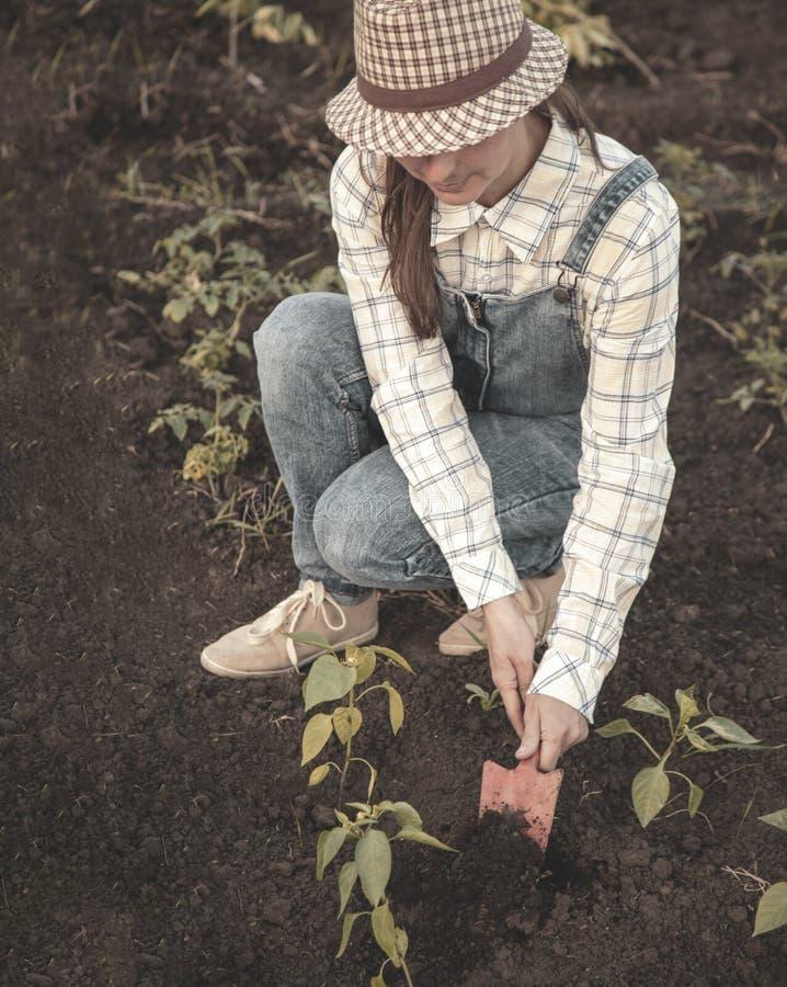 De vrouw in de tuin maakt het planten van zaden stock afbeeldingen