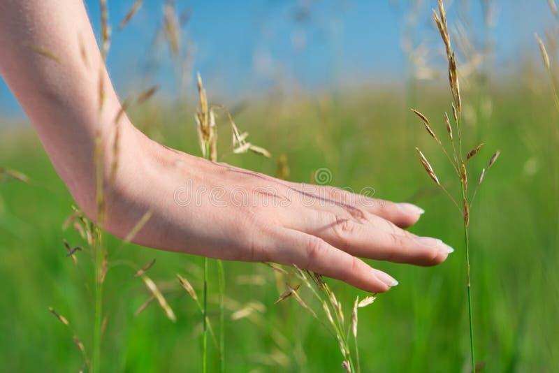 De vrouw van de close-up dient gras in stock fotografie