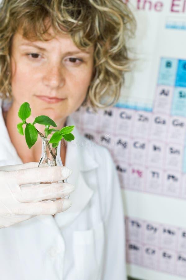 De vrouw van de wetenschapper stock foto